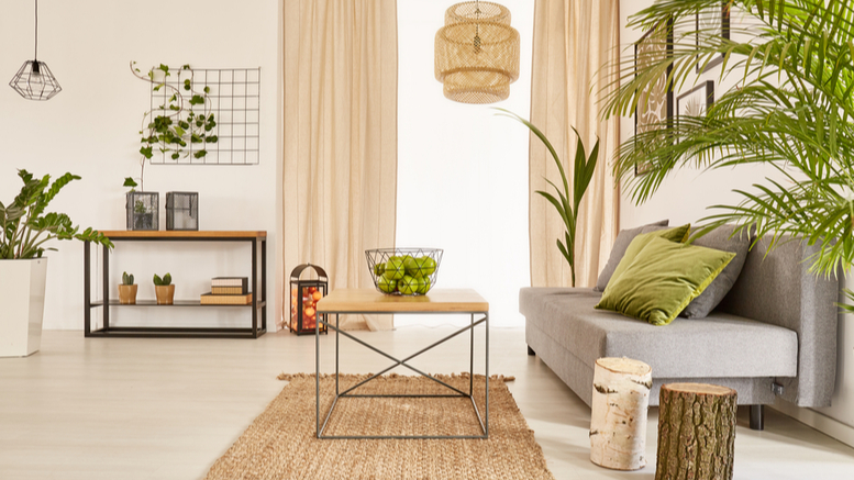 Indoor Plant Home Décor for Homes