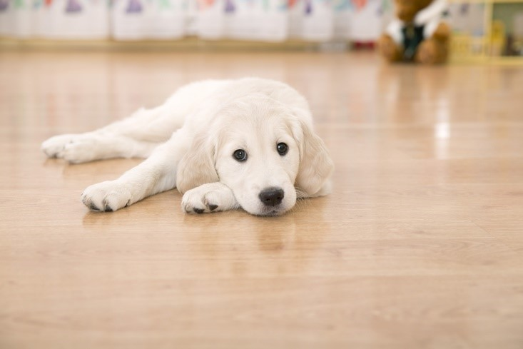 Tips To Make Your Home Pet Friendly Indiabulls Real Estate Blog